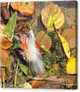 Autumn Leavings Canvas Print