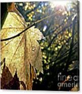 Autumn Light On Leaf Canvas Print