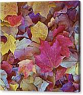 Autumn Maple Leaves On Forest Floor Canvas Print
