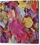 Autumn Maple Leaves - Phone Case Canvas Print