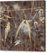 Autumn Milkweed Canvas Print