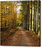 Autumn Mood In The Forrest Canvas Print