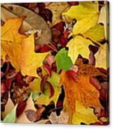 Autumn Moods 19 Canvas Print