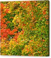 Autumn Mosaic Nj Canvas Print