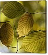 Autumn Mosaic Canvas Print