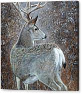 Autumn Muley Canvas Print