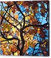 Autumn Oak Canvas Print