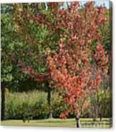 Autumn Oak Tree  Canvas Print
