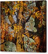 Autumn Oaks In Dance Mode Canvas Print