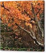 Autumn Of My Life Canvas Print
