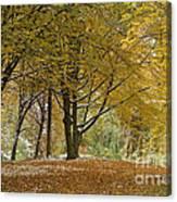 autumn on Moenchsberg in Salzburg Canvas Print