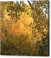 Autumn On The Bosque Canvas Print