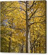 Autumn Orange Forest Colors At Hager Park No.1189 Canvas Print