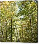 Autumn Pathway Canvas Print