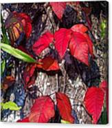 Autumn Poison Ivy Canvas Print
