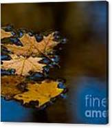 Autumn Puddle Canvas Print