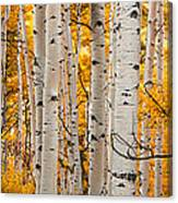 Autumn Quaking Aspen Panoramic Canvas Print