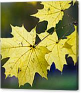 Autumn Rain Canvas Print