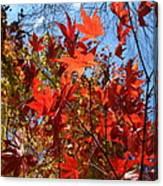 Autumn Reach  Canvas Print