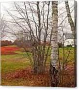 Autumn Red Field Maine  Canvas Print