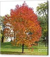 Autumn Red Tree Canvas Print