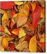 Autumn Remains Canvas Print