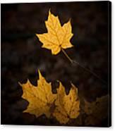 Autumn Remnant Canvas Print