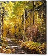 Autumn Road - Tipton Canyon - Casper Mountain - Casper Wyoming Canvas Print
