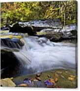 Autumn Rushing Water Canvas Print