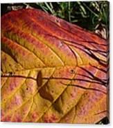 Autumn Saga Canvas Print