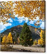 Autumn Scene Framed By Aspen Canvas Print