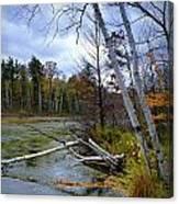 Autumn Scene Of Along The Shore Of The Platte River In Michigan Canvas Print