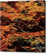 Autumn Solarisation 1 Canvas Print