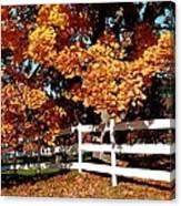 Autumn Splendor 10 Canvas Print