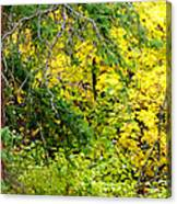 Autumn Splendor 14  Canvas Print