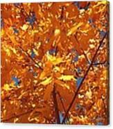 Autumn Splendor 15 Canvas Print