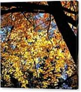 Autumn Splendor 3 Canvas Print