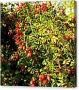 Autumn Splendor 5 Canvas Print