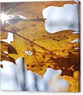 Autumn Star Canvas Print