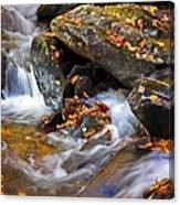 Autumn Stream North Georgia Canvas Print