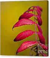 Autumn Sumac Canvas Print