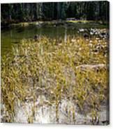 Autumn Sun On Mountain Pond Canvas Print