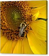 Autumn Sunflower Canvas Print