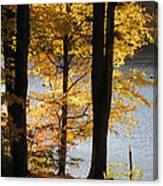 Autumn Sunlight Canvas Print
