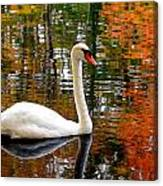 Autumn Swan Canvas Print