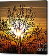 Autumn Tree In The Sunset Canvas Print