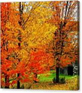 Autumn Trees By Barn Canvas Print