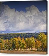 Autumn Trees In A Row Canvas Print