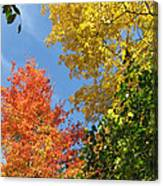 Autumn Treetops Canvas Print