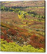 Autumn Tundra With Boreal Forest Canvas Print